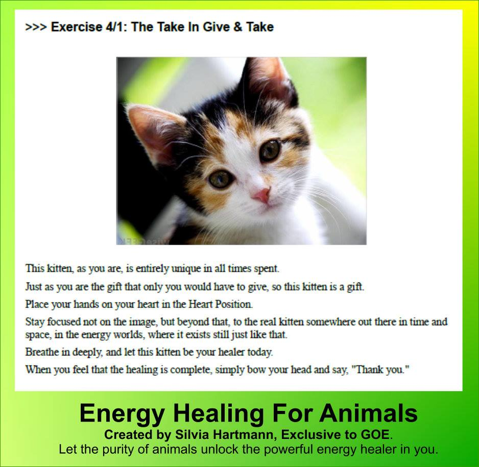 The GoE's Energy Healing For Animals - Distance Learning Course