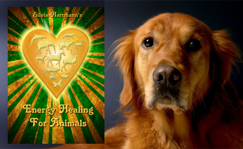 The AMT's Energy Healing For Animals - Distance Learning Course